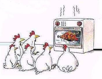 BDSM animalier: le masochisme des poulets.