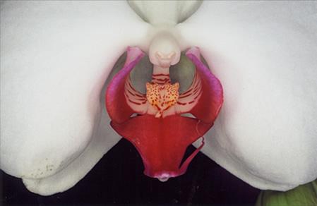 Nobuyoshi Araki Flower