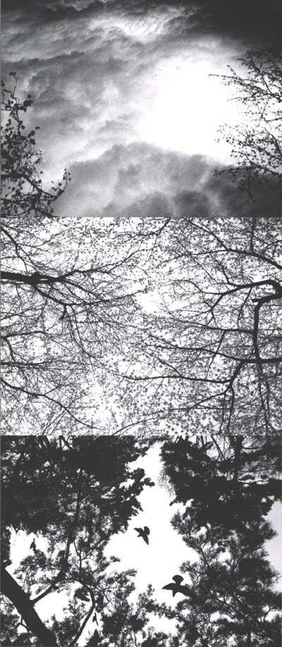 Nobuyoshi Araki Skys 1990-1992 AURORAWEBLOG.