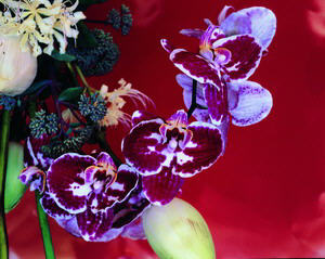 AURORAWEBLOG Nobuyoshi Araki Flowers