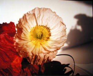 Nobuyoshi Araki flower AURORAWEBLOG